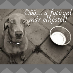 Churpi himalájai sajt rágócsont kutyáknak - S, BARF LOVE