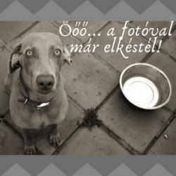 "Ciao Puppy! nyakörv ""S"", Puppy Handmade"