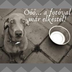 """BULLY DREAM Francia bulldog mintás nyakörv kék """"M"""", Puppy Handmade"""