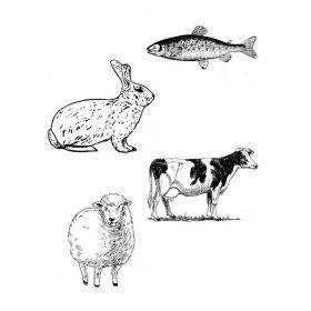 Állatfajonként