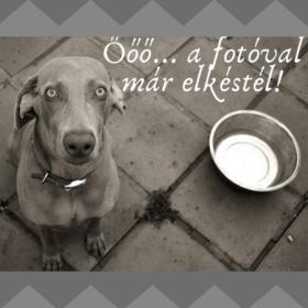 Brit Monoprotein